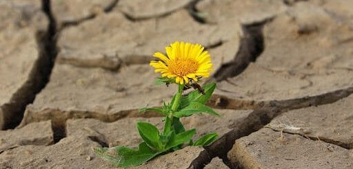 Kiềm chế cảm xúc và 4 lợi ích không thể phủ nhận 4